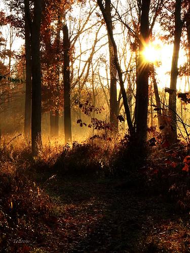 path trees sun fog foggy bright autumn fall morning oakopenings toledometroparks northwestohio ohio scouttrail scenery nature landscape beauty