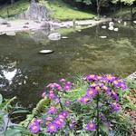 紅葉にはちょっと早いね。#シオン #紫苑  #小石川後楽園