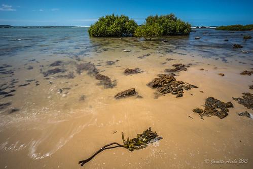 ocean longexposure sea seaweed beach water coast sand rocks australia lagoon coastal le shore nsw newsouthwales coastline 2015 yuraygirnationalpark diggerscamp nd6filter sonya7r