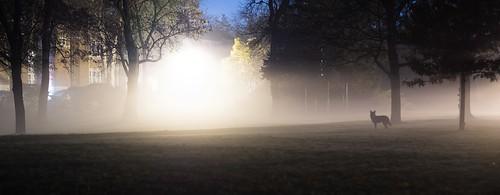 Coyote in Fog II