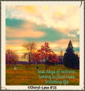 last autumn colours