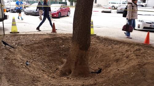 Air spade work