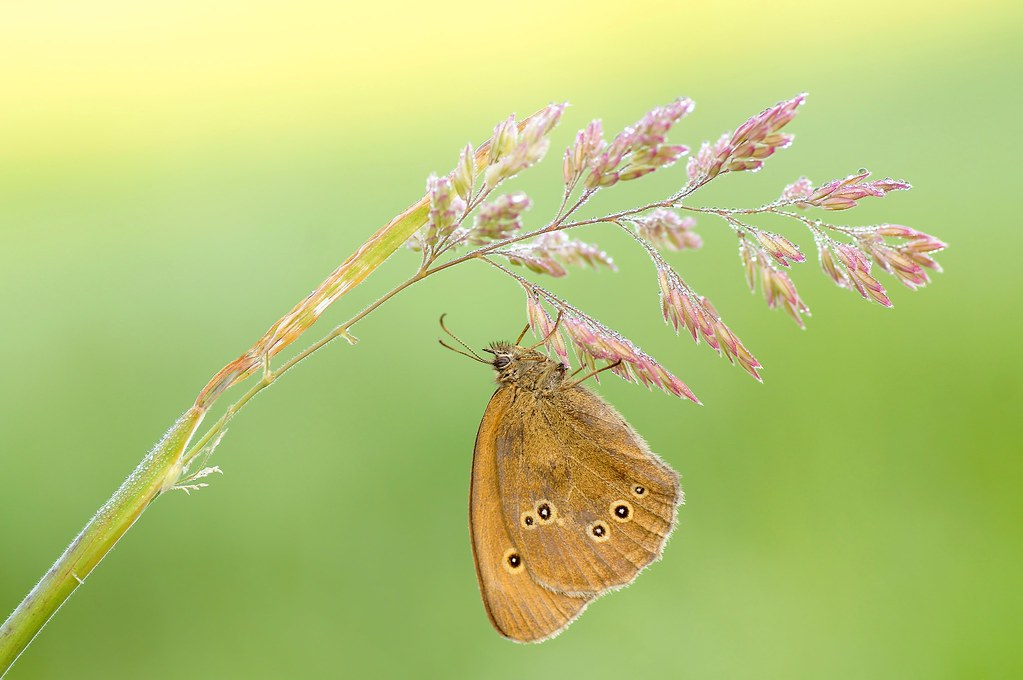 Butterfly Is, That Is How I Met Photograph ...