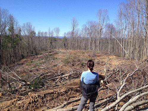 Courtney surveys the homesite just prior to clearing and grading
