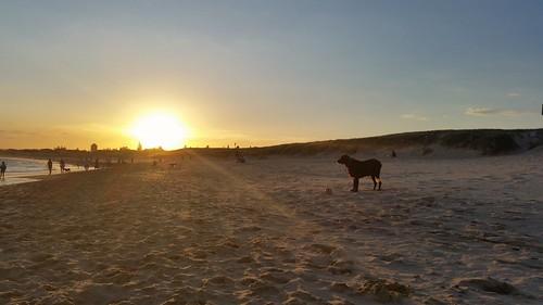 cameraphone sunset summer beach nice australia nsw irishsetter wandabeach