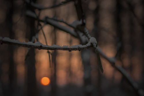 trees sunset shadow sun snow forest lights mood bokeh dusk depthoffield nikkor50mmf18g f18g
