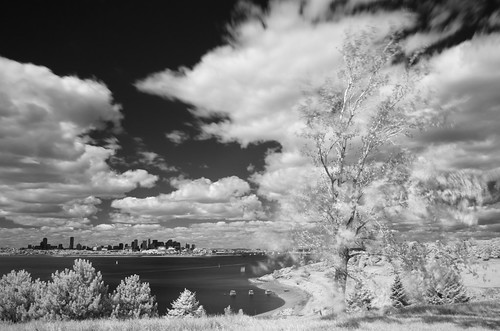 bw ir island tripod monochrome blackandwhite infrared r72 bostonharborislands spectacleisland clouds boston skyline tree
