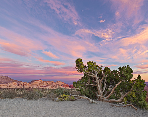 2016 america blm canon5dmarkivwideangle hdr junipertree mojavedesert nevada oct places redrockcanyon southwest usa fall landscape nature sunset