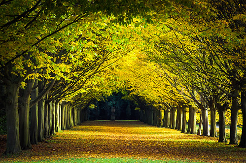 Tree Lined Avenue in Autumn, Anglesey Abbey Landscape Gardens, Cambridge, UK | by ukgardenphotos