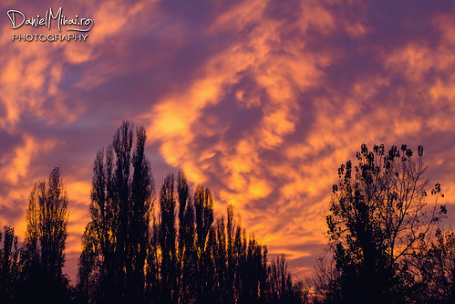 Sunset over the trees by Daniel Mihai