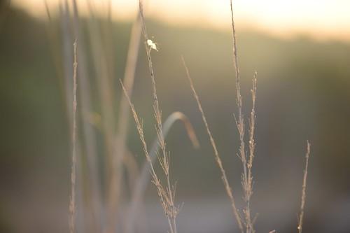sunset nature bokeh