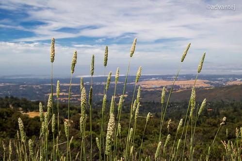 california cali bayarea skyline boulevard nature outdoors plants