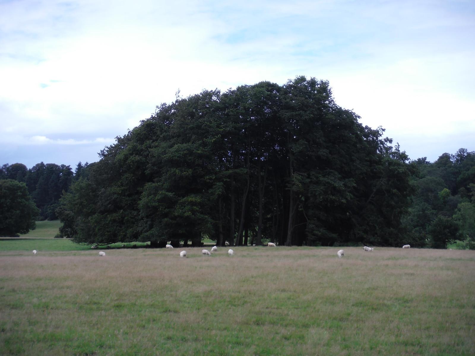 Trees, Fonthill House SWC Walk 248 Tisbury Circular via Hindon