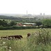 View of Didcot power station and cows from Wittenham Clumps, Oxfordshire
