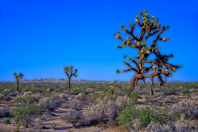 Three Desert Trees