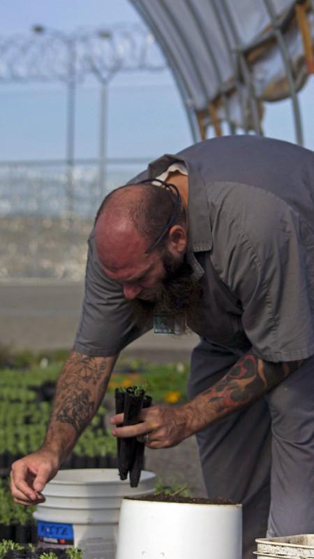 Prisoners Growing Sagebrush