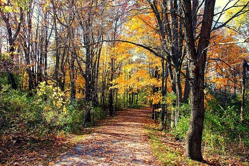 cannontwptrail hiking trails nct westmichigan michigan autumn yellow brown scenic puremichigan usa colors october fall woodlandwonders wonderfulworld beautifulearth 18250mmf3563dcosmacrohsm sigma canon 2015