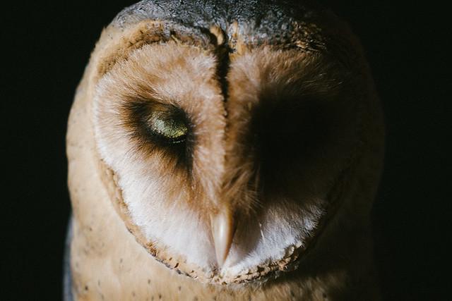 305 - Peace Owl