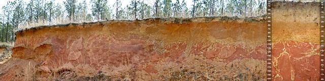 Plinthic soil and landscape with plinthite and petroplinthite