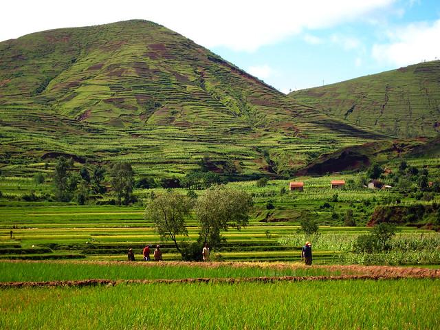 Madagascar2 - 106