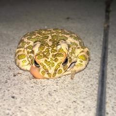 #Craaack #ClosedEncounter with a #Frog #shotonlumia #lumia930 #nofilter