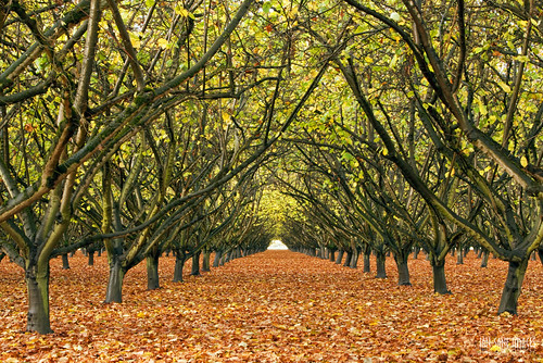 road county camera autumn light two sun tree colors leaves oregon canon lens landscape ian photography eos se is grove mark images ii wallace 5d usm dayton hazelnut filbert yamhill sane ef70200mm f28l stringtown hazelsden