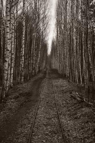 blackandwhite abandoned 35mm blackwhite spring woods nikon railway latvia rails riga ziepniekkalns d7100