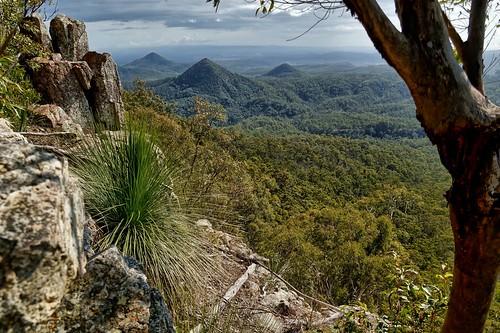 hiking australia bushwalking queensland flinders grasstree xanthorrhoea flinderspeak