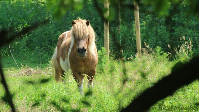 A blonde chestnut on the forest glade.