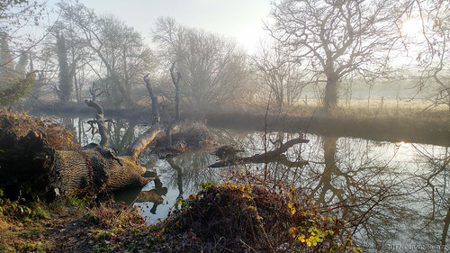 2017 oru uk surrey hersham hershamriversidepark river fog morning winter rivermole tree trees water reflection sunrise park paulweller fallen timber mobilephotography