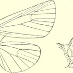 "Image from page 484 of ""Catalogue of Lepidoptera Phalaenae in the British Museum"" (1913)"