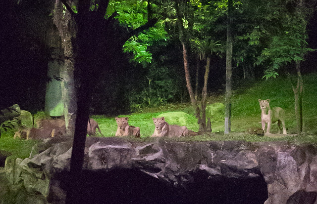 Singapore Zoo by Night