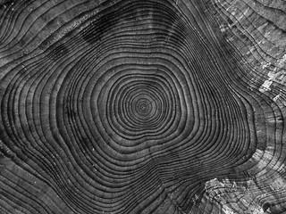 Projekt: Baumstümpfe | by di.fe88