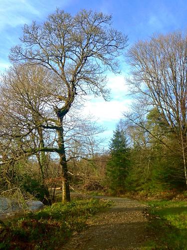 green river island path cork bluesky wintersolstice newmarket islandwood htmt iphone5 2015onephotoeachday