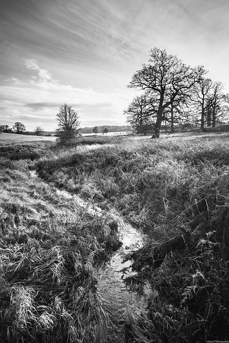 bridge trees blackandwhite bw tree water monochrome grass river landscape stream fuji nt fujifilm nationaltrust watercourse ickworth linnet ickworthhouse xpro1 riverlinnet