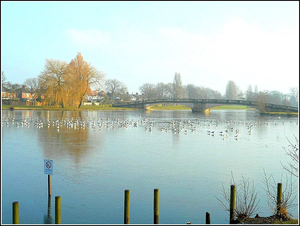 East Park Lake Hull..