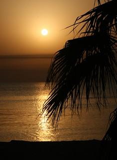 Tropical Kuwait