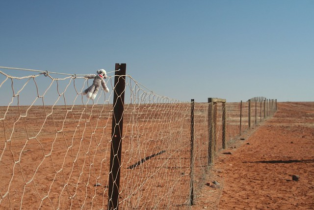 Sock Monkey Climbs the World's Longest Fence