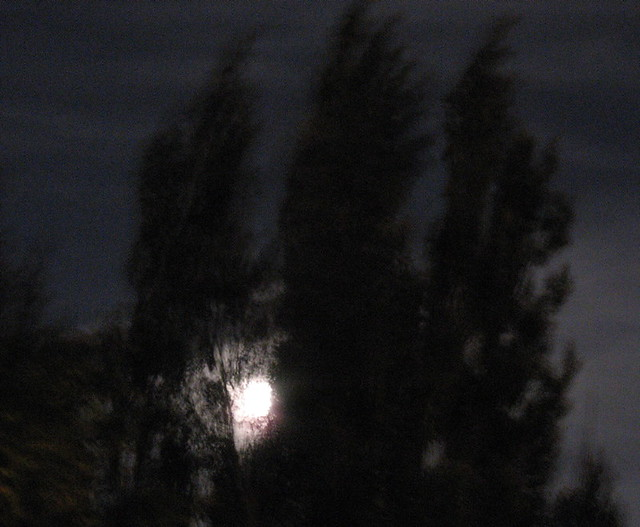 Wind (with trees and full moon)