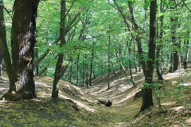 Las Bielanski Nature Reserve, Warsaw, Poland
