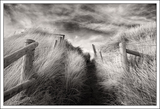 Path Into the Dunes