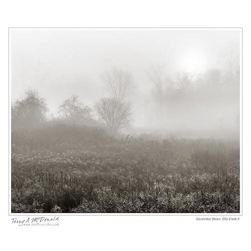 morning autumn mist ontario canada fall fog sunrise river landscape dawn scenery stream foggy wildflowers timing elliscreek nikond800e grandriverwatershed 2485nikkorafsvrii