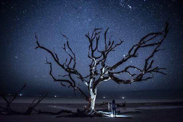 Starry Night on Driftwood Beach