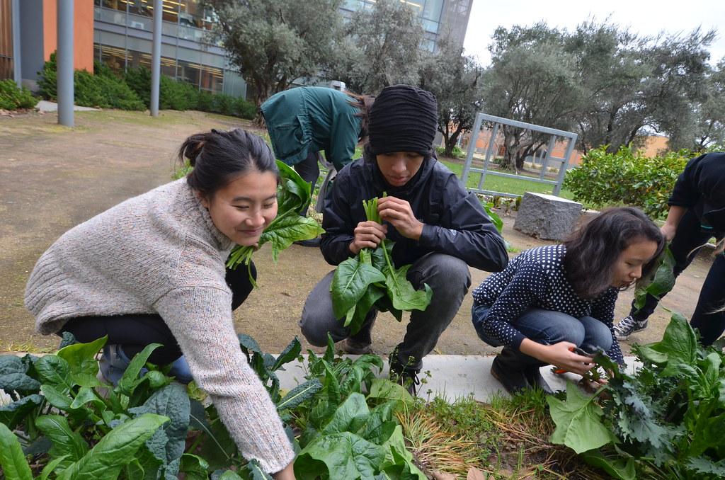 Good Life Garden Harvest