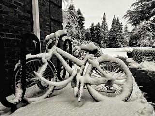 Bicycle / Bicicleta / Vélo