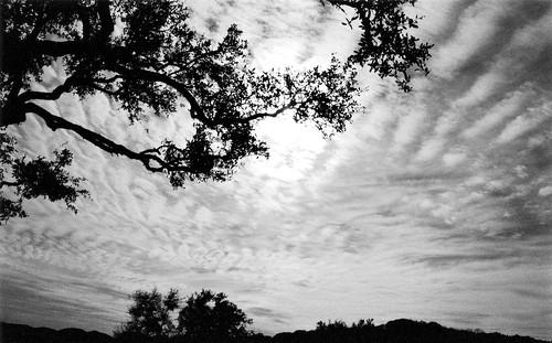 pipecreek texas usa nikonhn2lenshood nikon nikonn80 nikondlr35mmfilmcamera hoyapro152mmmcuv0filter nikonafnikkor28mmf28dlens kodakprofessionalbw400cnfilm epsonperfectionv600photoscanner blackwhite texashillcountry banderacounty latigoranch bwfp nikonr60redfilter cloudsstormssunsetssunrises