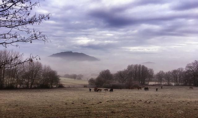 2016 Pferde im frostigen Nebel