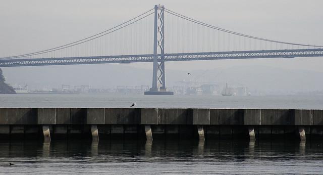 Bird And Bridge