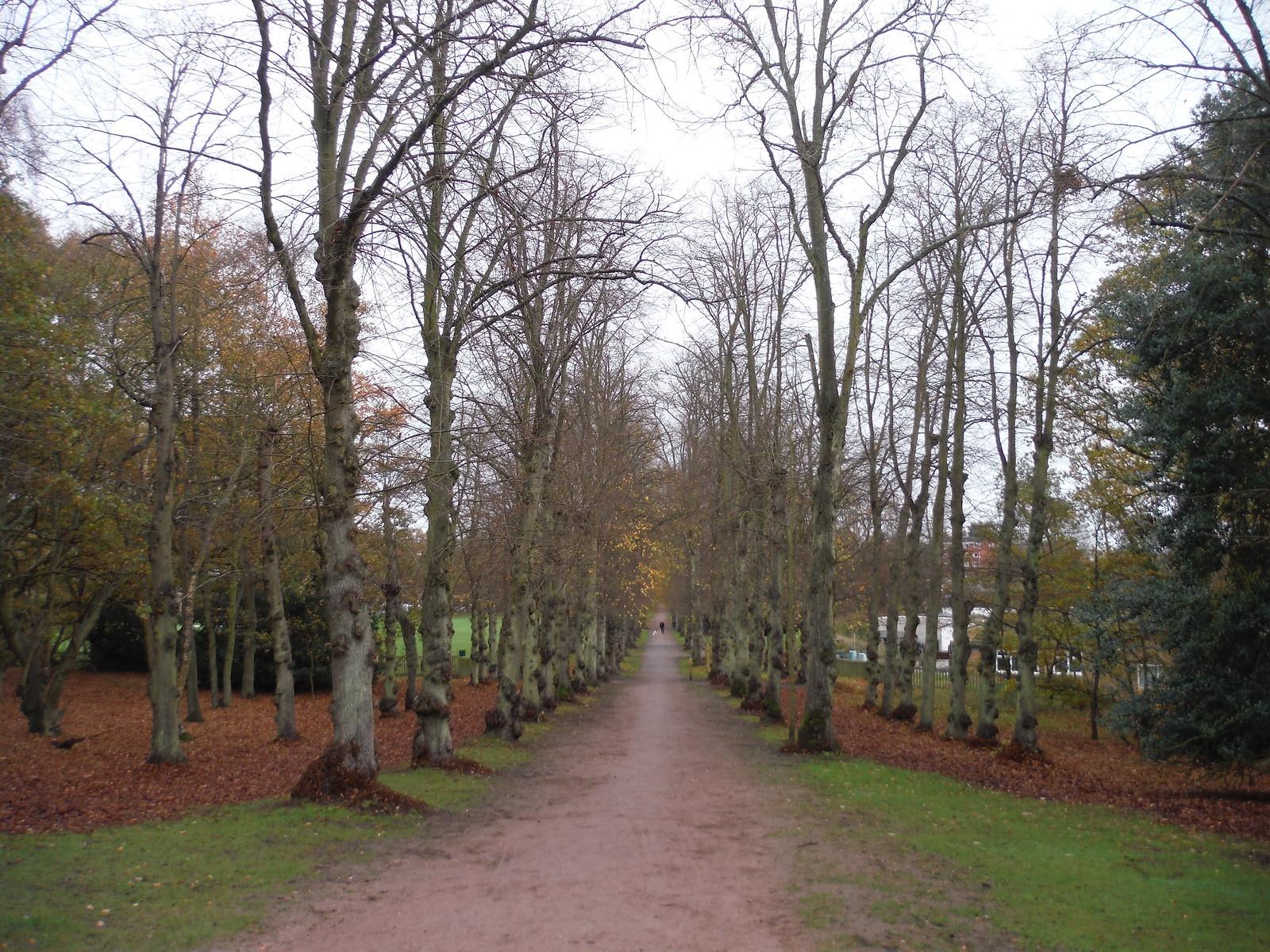 Tree-lined Avenue, Ampthill (I) SWC Walk 232 Lidlington to Flitwick