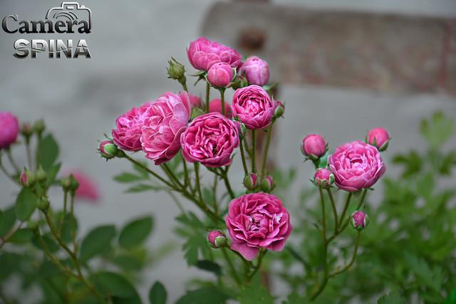 Flor 040
